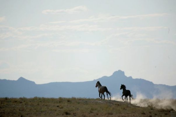 Native Wild Horses
