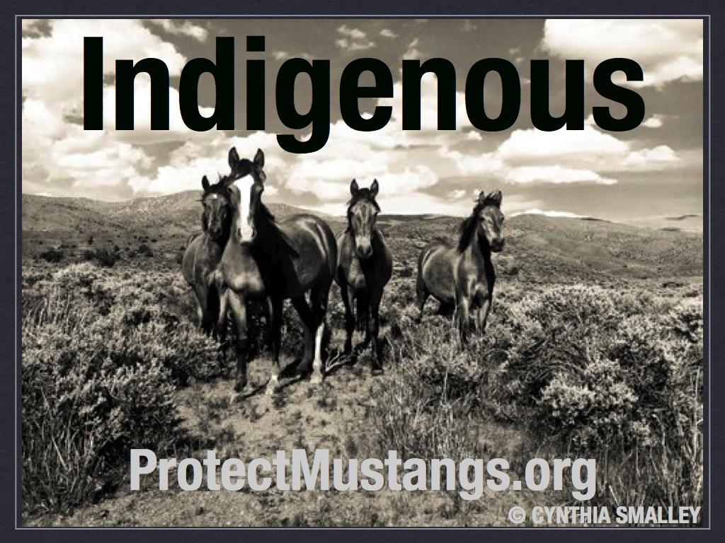 Indigenous © Protect Mustangs
