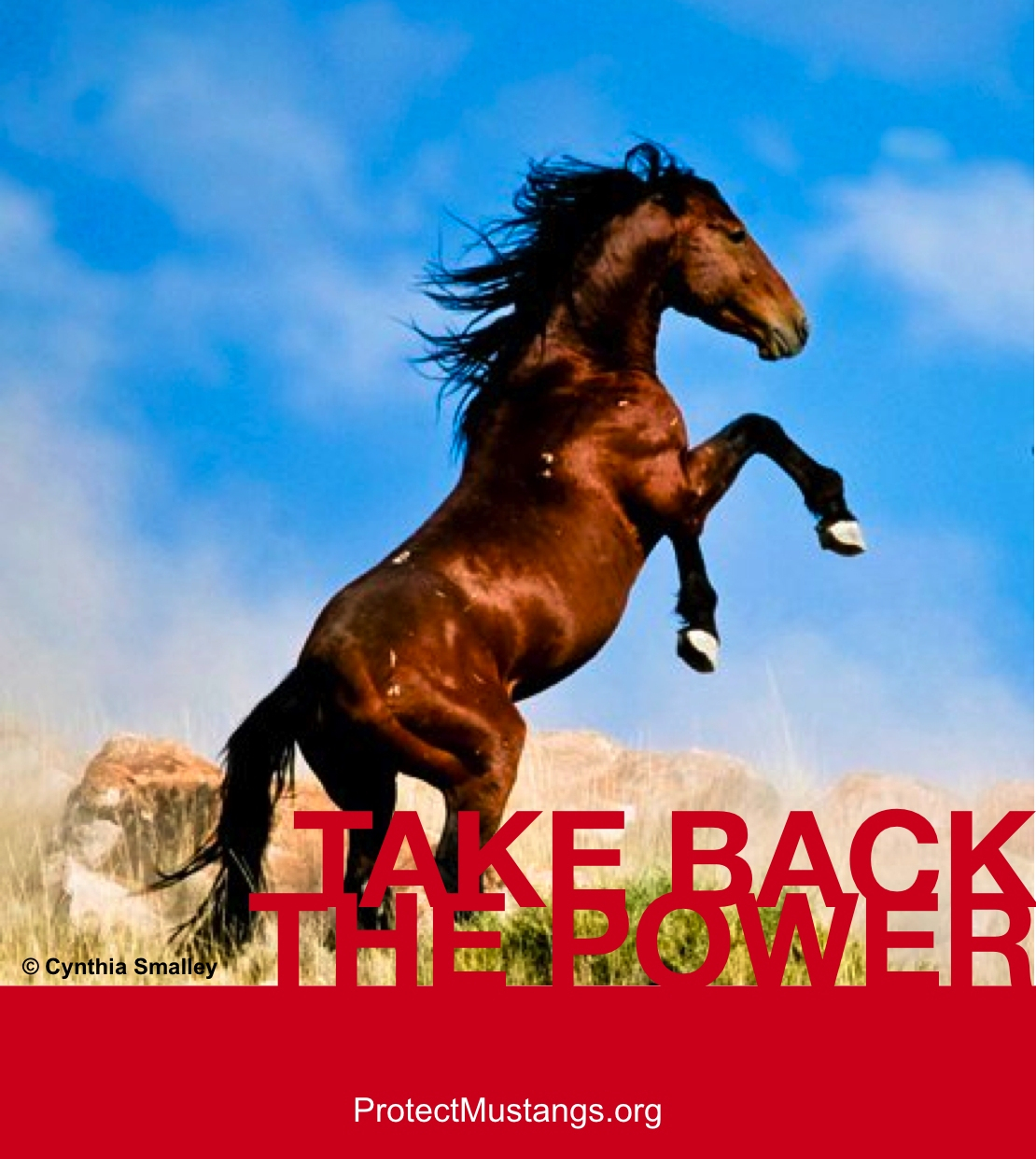 Take Back the Power (© Protect Mustangs with Photo © Cynthia Smalley)