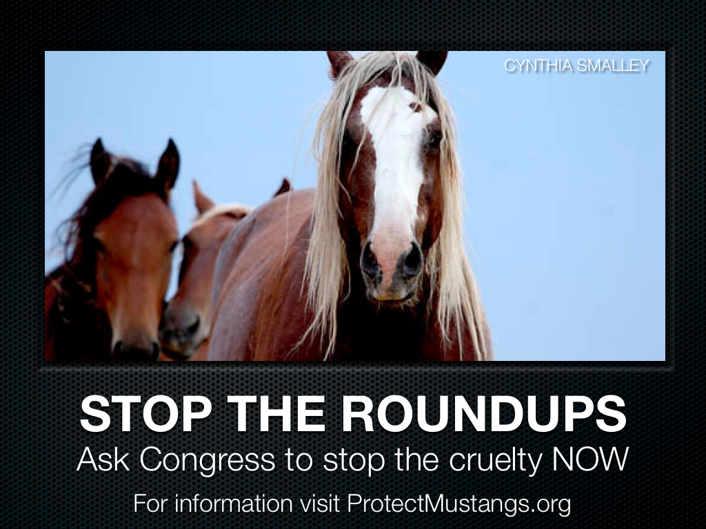 Stop the Roundups