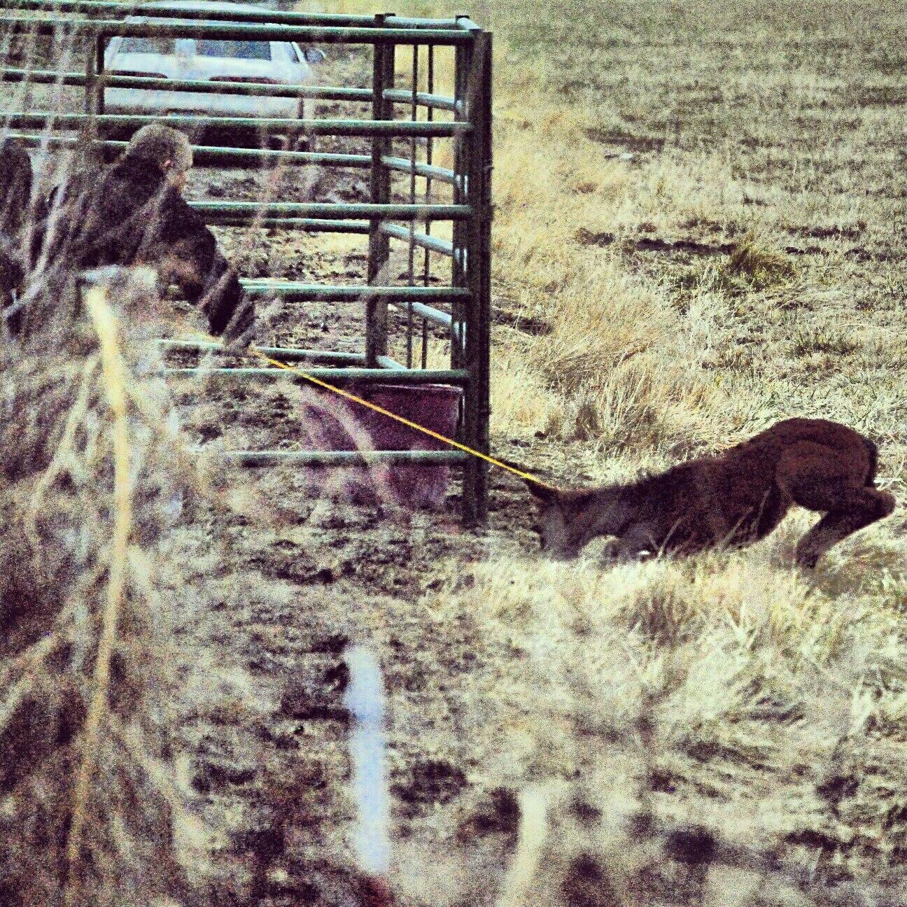 Reno: Damonte wild horses trapped w/ cruelty