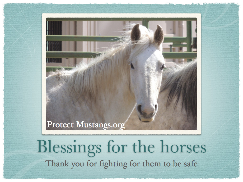 PM  Blessing for Horses.001