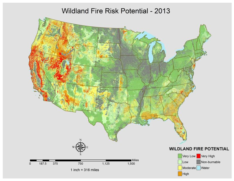 wild horses prevent wildfires protect mustangs