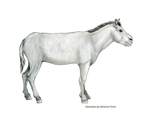 This is an artist rendering of the Ice Age horse, Equus scotti. Image provided by the San Bernardino County Museum.