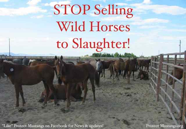 Protect Mustangs.org