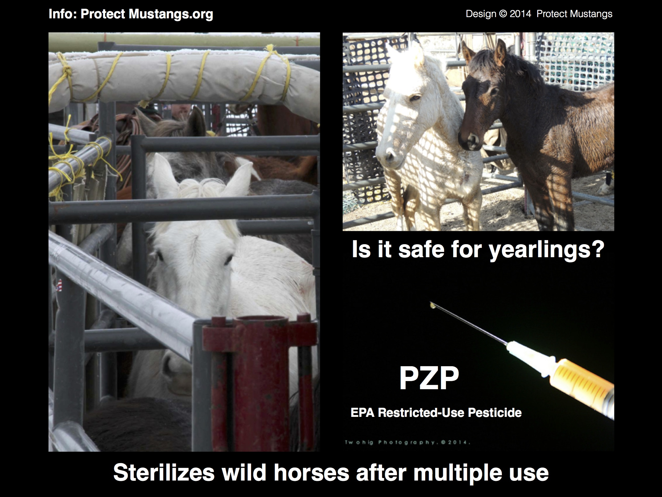 PM PZP Syringe Yearling Meme