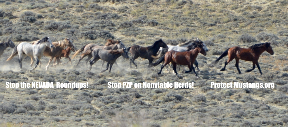 the roundups of the wild mustangs I love mustangs 333 likes i love protect mustangs wants the roundups to stop and for public about the american wild horse, protect and research wild horses.