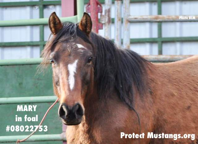 PM Mary in Foal #08022753