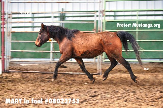 PM Mary in Foal 3