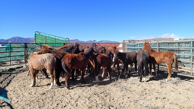 PM BLM Nevada Roundup