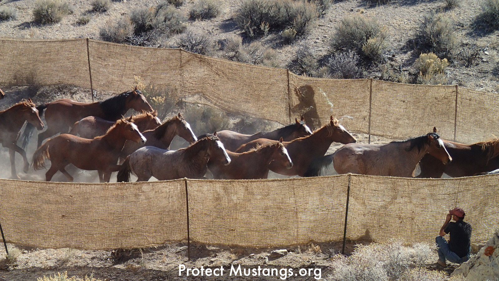 a look at the slaughter of americas horses W ith the house blocking anti-horse slaughter amendments to 2018 spending legislation, the fate of america's wild horses and burros now rests with the senate take action: 1) enter your address and zip code below 2) call your two senators at the numbers that appear below and tell them: i'm [name] from [state] calling to ask senator [name] to.