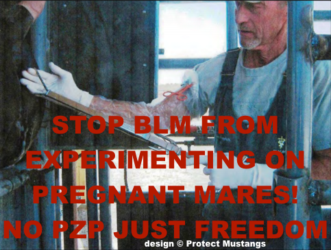 Stop BLM from EXPERIMENTING on wild mares!